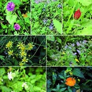 Jongen Blumen