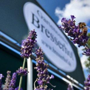 Bresserhof Blumen vor Geschäft