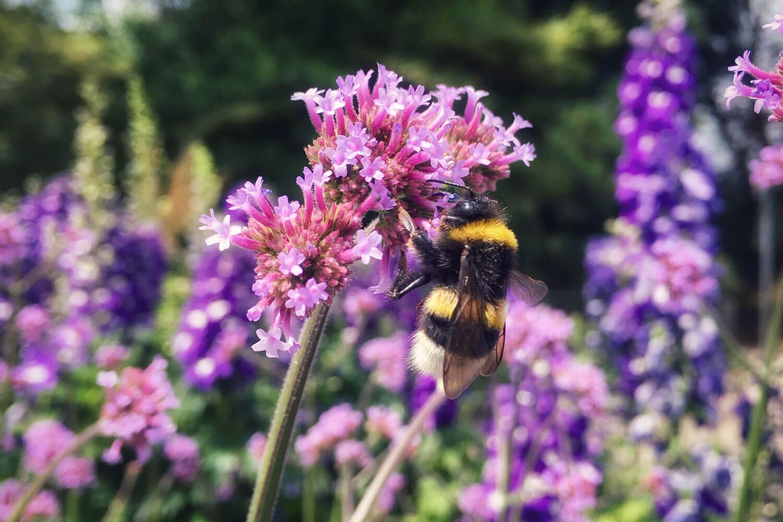 Bresserhof Blumen