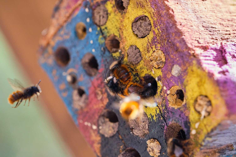 Familie K aus Schiefbahn - Bienenhotel 02