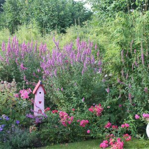 Bunter Garten mit Insektenhäuschen