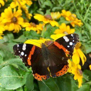 Bresserhof Schmetterling