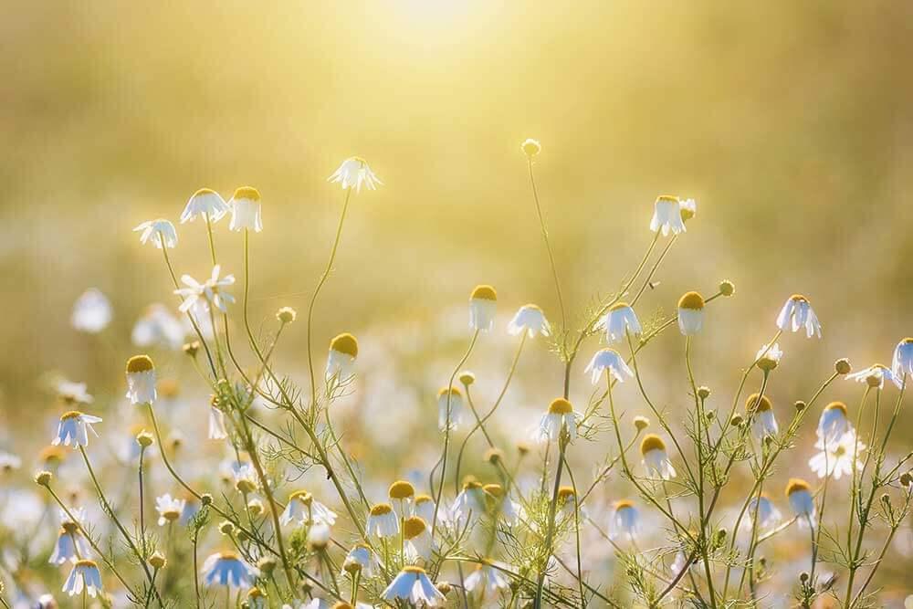 Was können wir machen - Willicher Gärtnereien