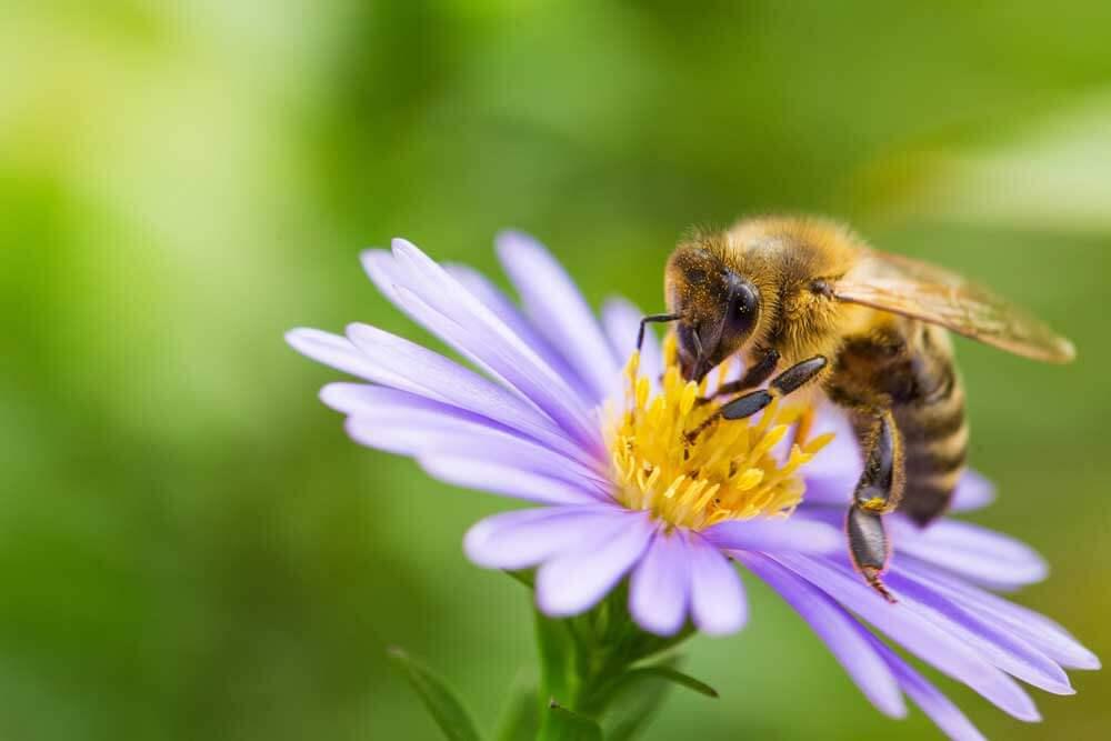 Fleissig wie die Bienchen